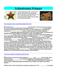 Echinodermata Webquest Visit the following web sites to answer the