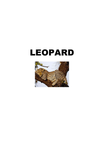 Research Pack – Leopard