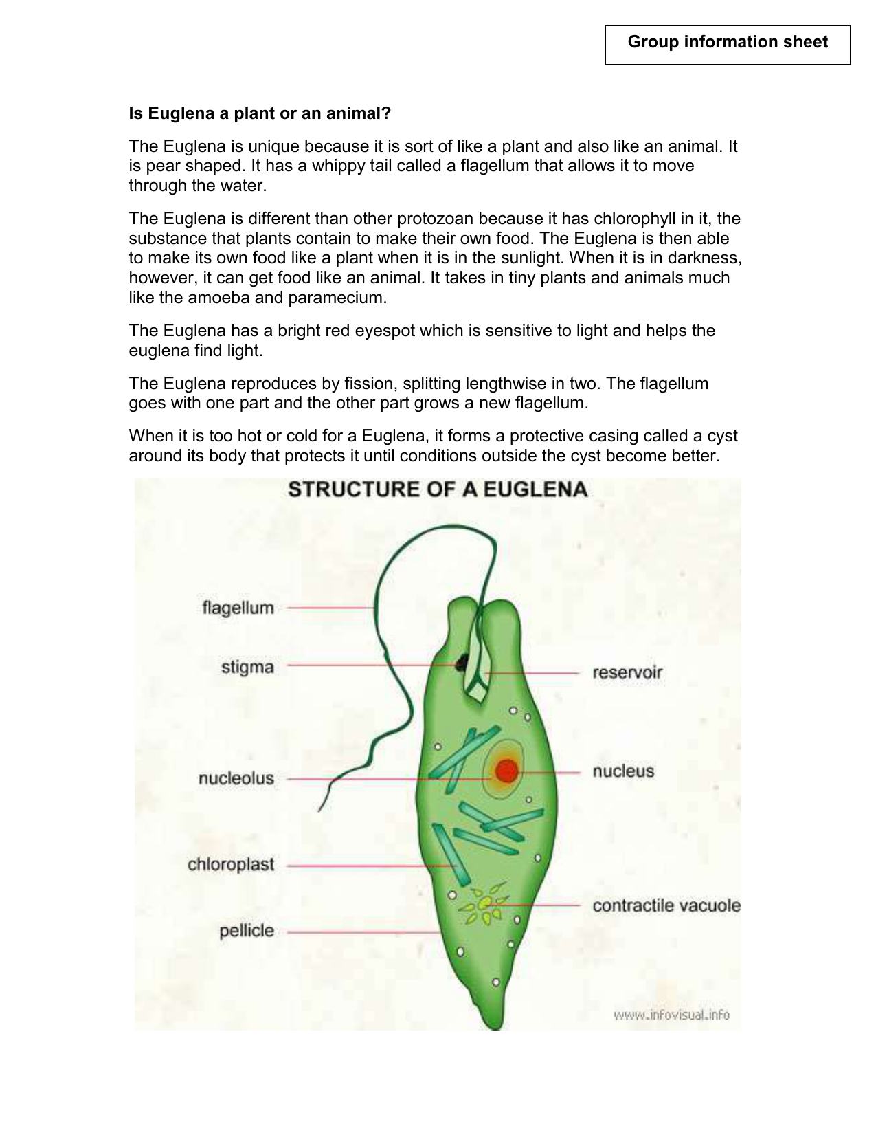 Is euglena a plant or animal ccuart Image collections