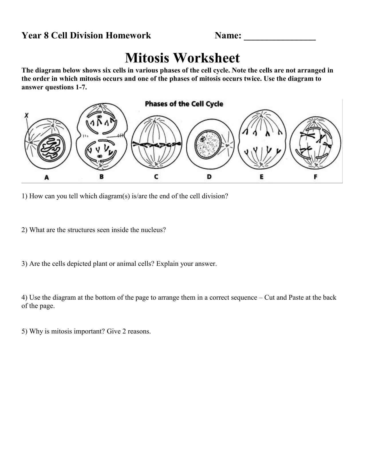 The Cell Cycle Worksheet Answers Newatvs Info