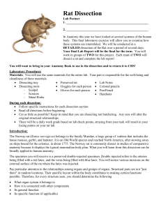 Rat External Anatomy
