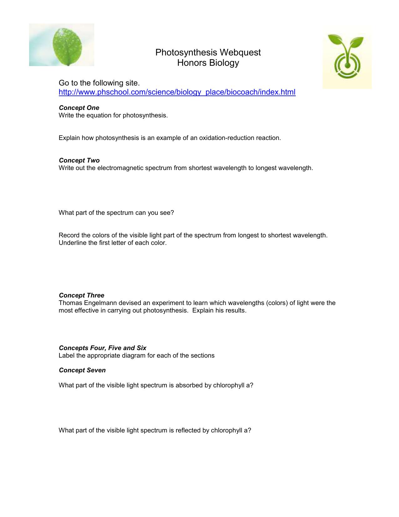 Photosynthesis webquest ccuart Choice Image