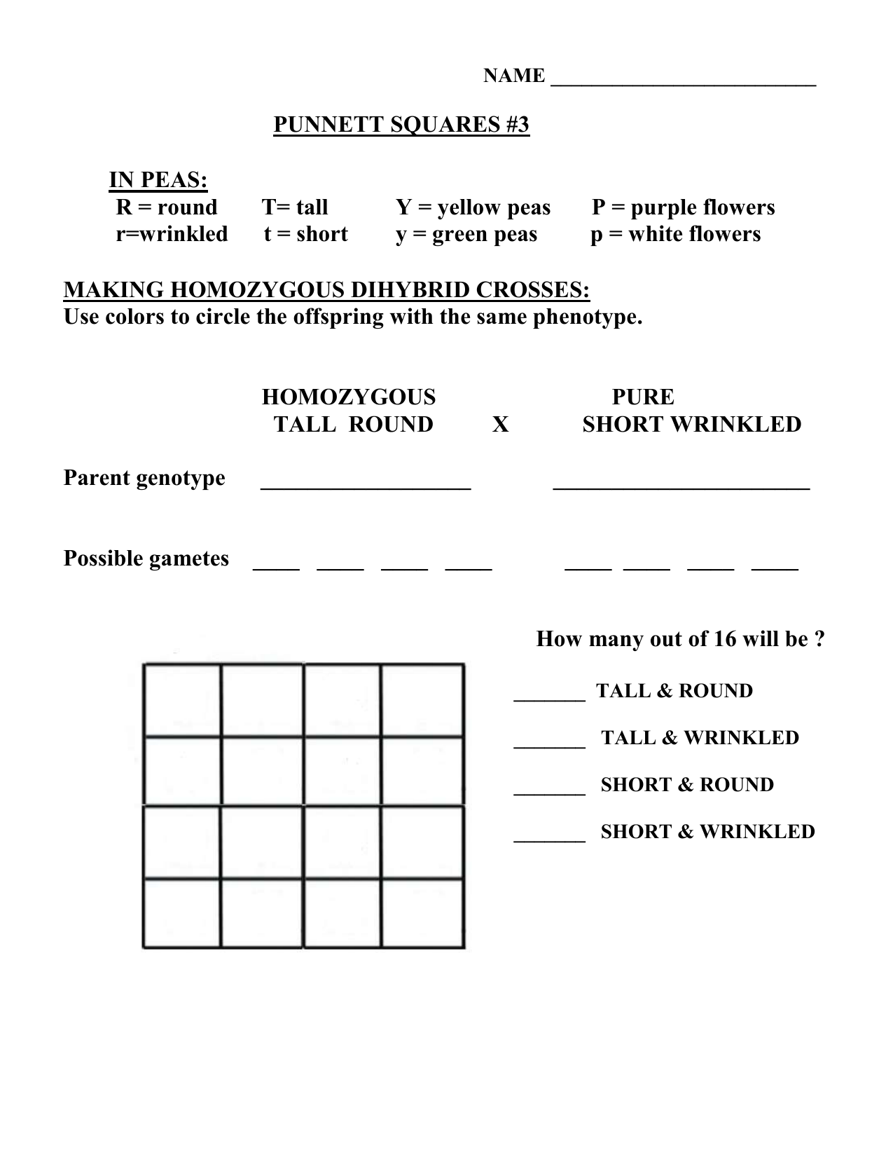 Worksheets Punnett Square Worksheet 1 Answer Key punnett square practice 3