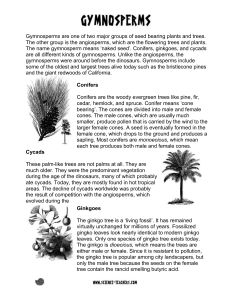 gymnosperm handout - Science
