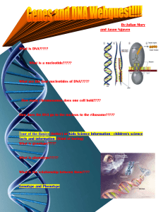 Webquests_files/Genes and DNA SWQ