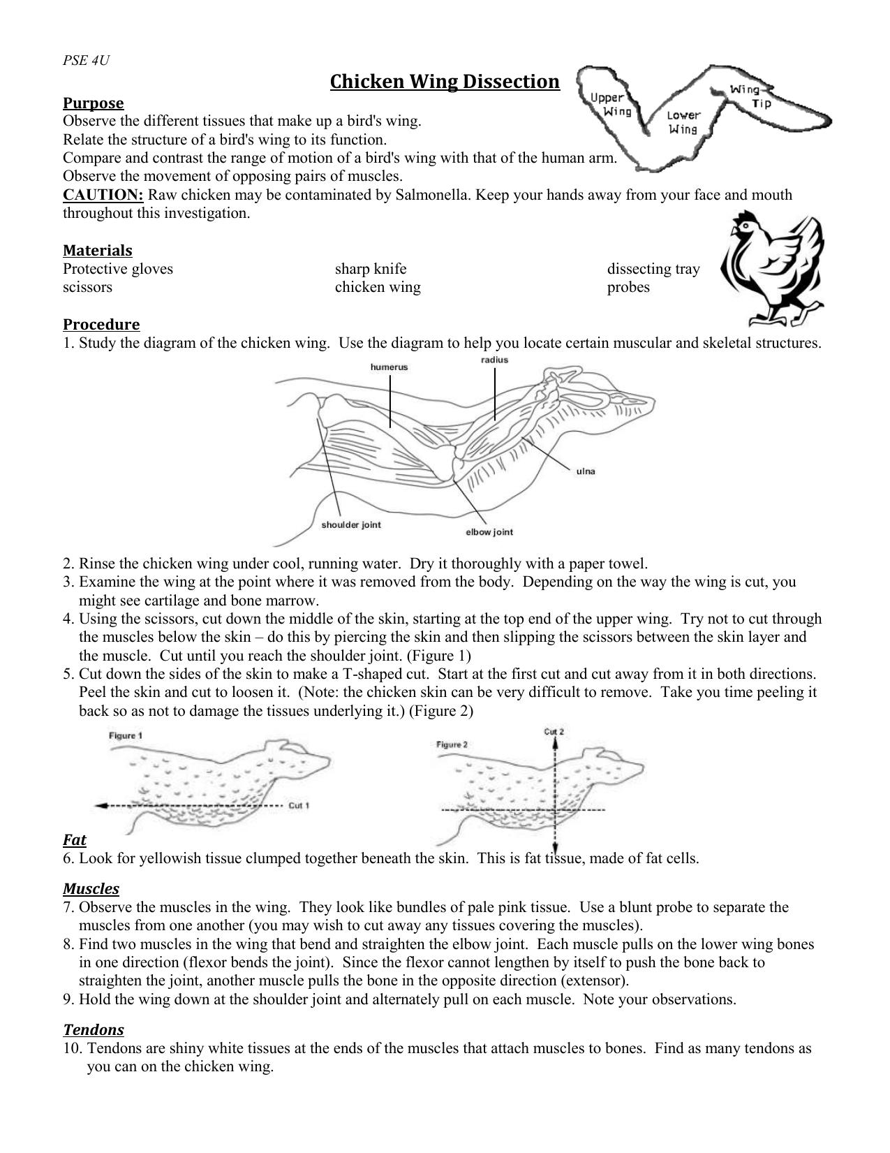 chicken wing diagram