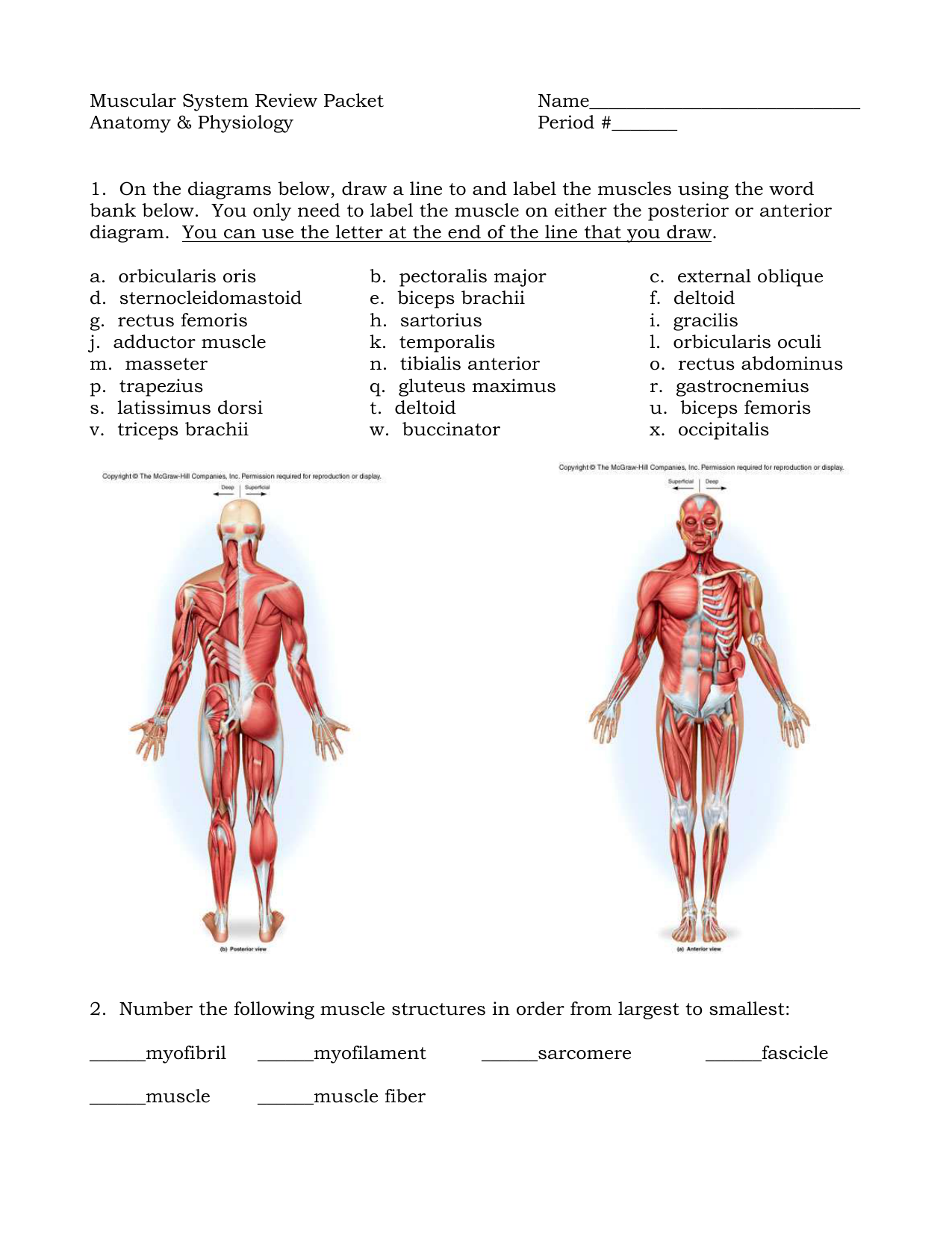 Muscular system review packet pooptronica