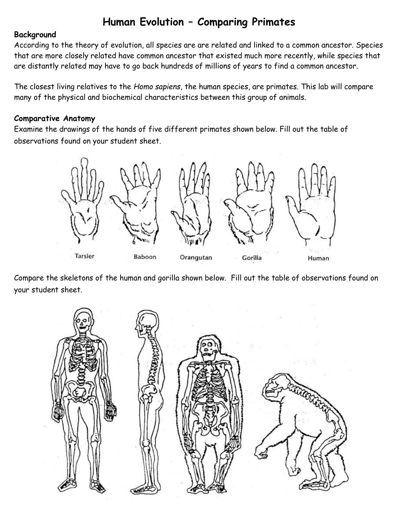 Human Evolution Comparing Primates Background According To