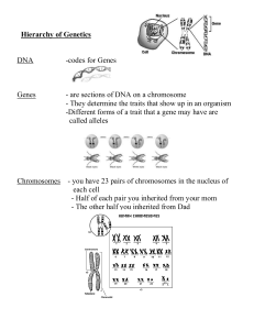 Hierarchy of Genetics
