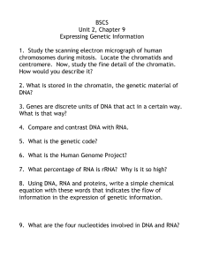 Expressing Genetic Information