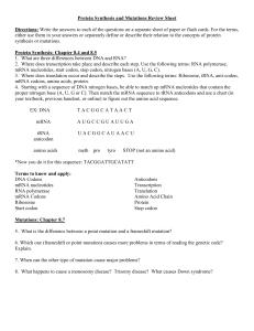 Protein Synthesis and Mutations Review Sheet 2014