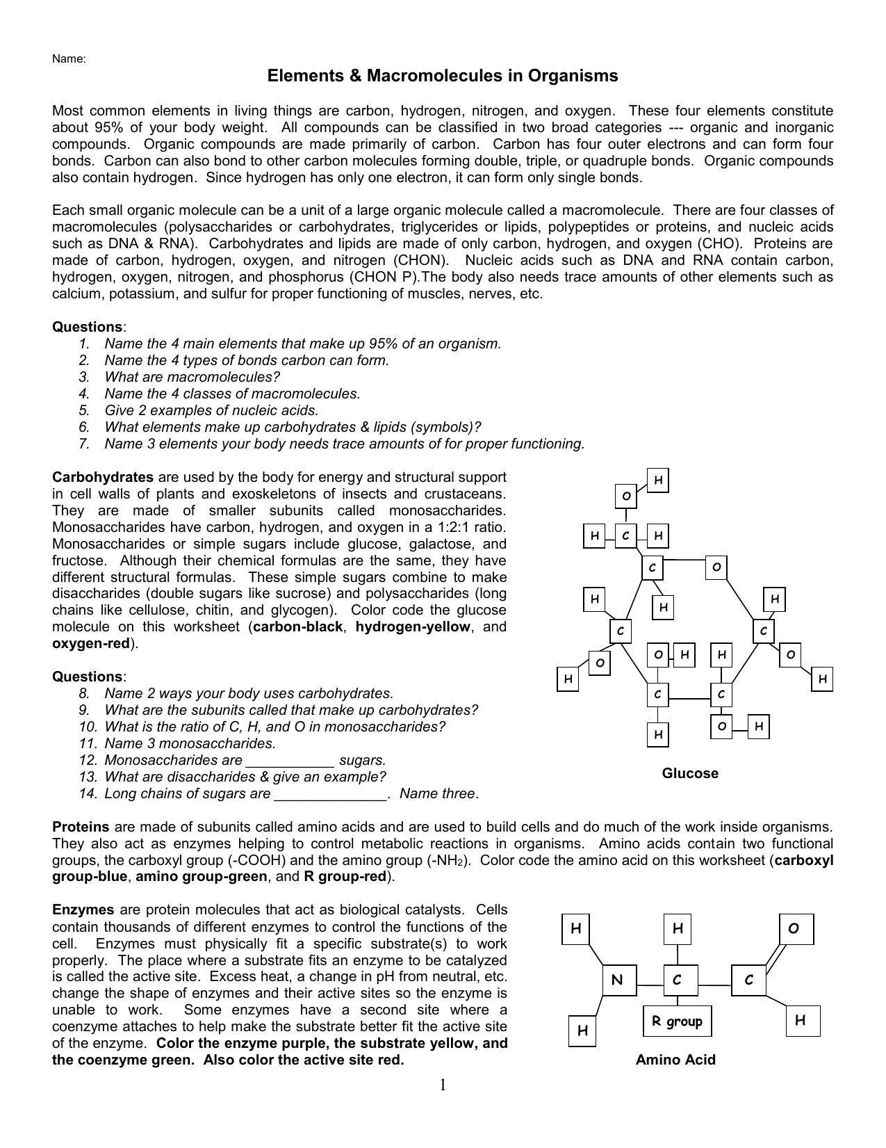 Organic Macromolecules Coloring Sheet – Main Idea Worksheets High School