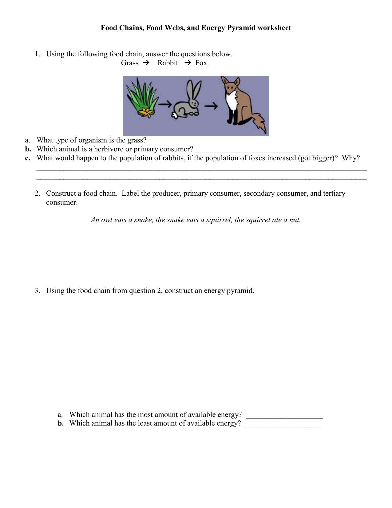 Food Chains Food Webs and Energy Pyramid worksheet