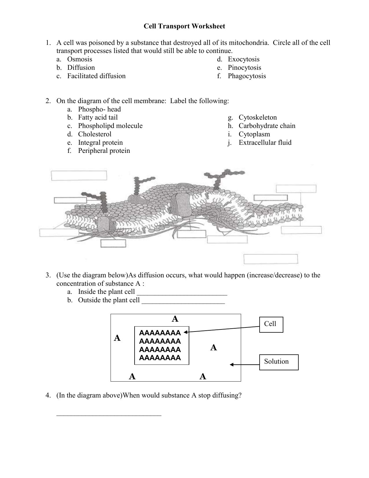 Pre-AP Biology Cell Transport Worksheet
