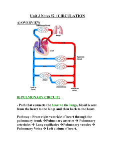 Unit J Notes #2 Pulmonary and Systemic Circulation