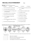 the cell cycle worksheet - Home