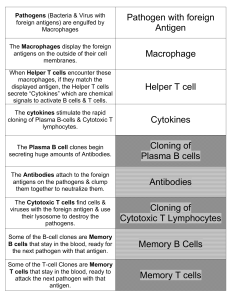 Pathogens (Bacteria with foreign antigens) are