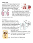 Respiratory System As you learned, the circulatory system was