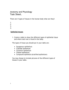 Tissues task sheet