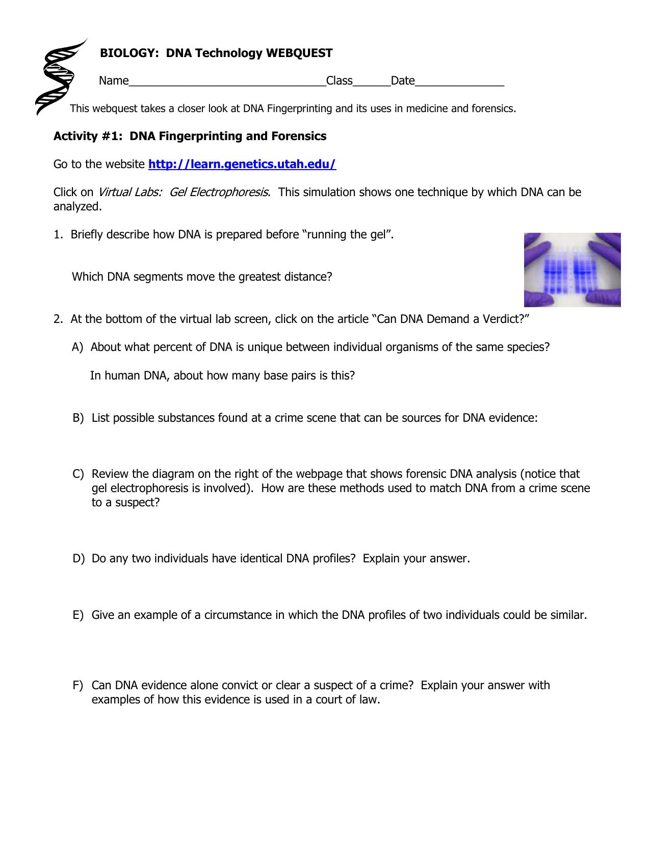 biology dna webquest answer key