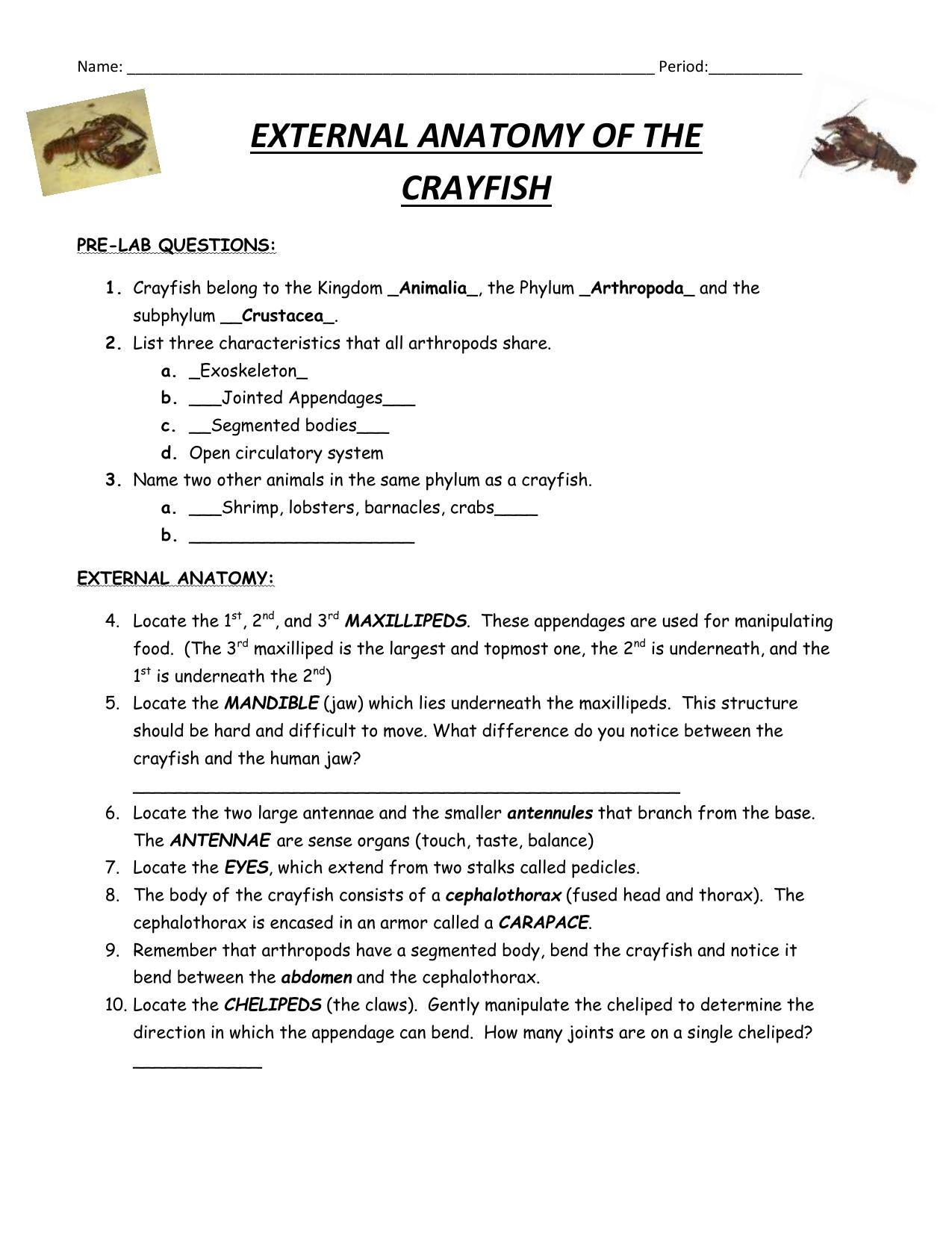 Name Period External Anatomy Of The Crayfish