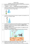 Energy in an Ecosystem Summary Notes