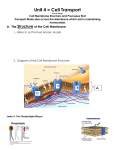 Unit 4 Cell Transport Notes Packet - Dallastown Area School District