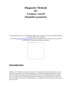 Diagnostic Methods for Granary weevil Sitophilus granarius
