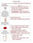Components of Blood note sheet