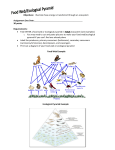 Food web check point