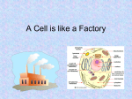 cell as a factory
