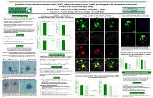 If so, is trkB mRNA in SNB motor neurons