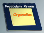 Vocabulary Review organelles