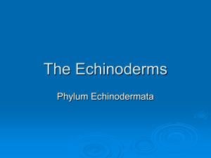 The_Echinoderms-no-video