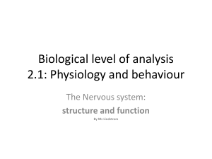 nervous-system-structure-and-function