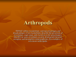 Arthropods - About Miss Brougham