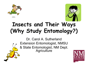 Why Study Insects?