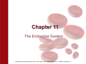 Chapter 11 The Endocrine System