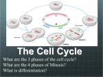 The Cell Cycle - Haiku Learning