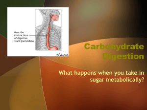 Carbohydrate Digestion - lynch-lhhs-nhl