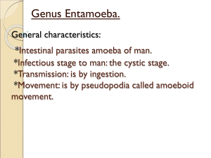 General characteristics: Intestinal parasites amoeba of man