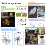Arctic Adaptations Poster