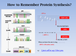 How to remember Protein Synthesis