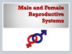 """Male and Female Reproductive Systems"" PowerPoint"