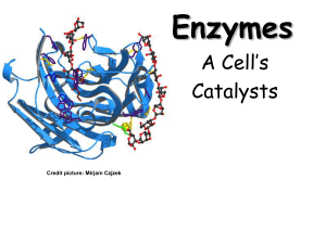 Enzymes - Science Geek