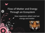 Flow of Matter and Energy Through an Ecosystem