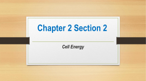 Chapter 2 Section 2 Cell Energy From Sun to Cell