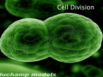 Cell Division - AKNS Students Blogspot