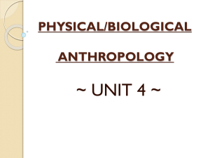 physical/biological anthropology
