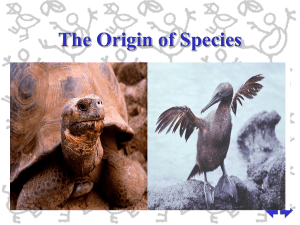 What is a species?
